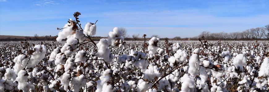 fibres naturelles textiles